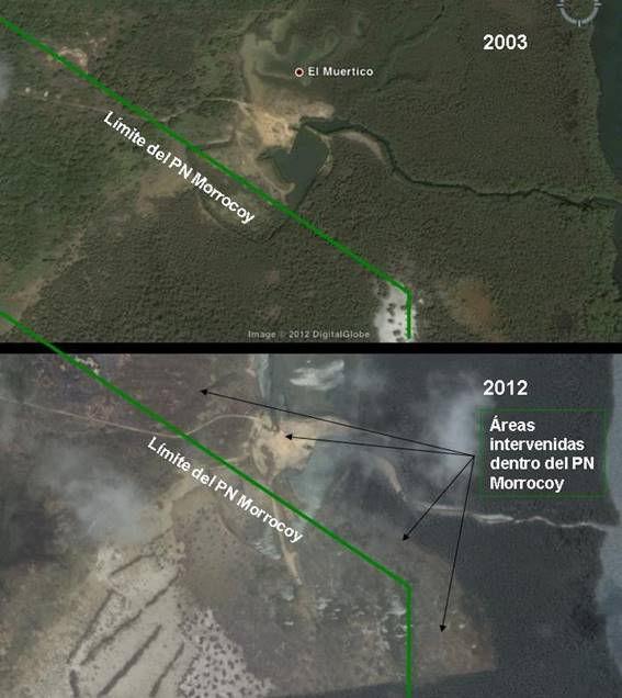 Impacto sobre los manglares del Parque Nacional Morrocoy por proyectos de Desarrollo Turístico (Puerto Morrocoy y Venetur)