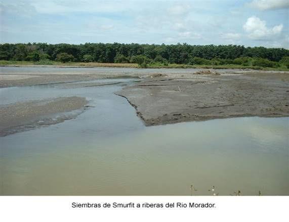 Las luchas de las comunidades campesinas de Ospino contra las plantaciones de eucalipto, estado Portuguesa