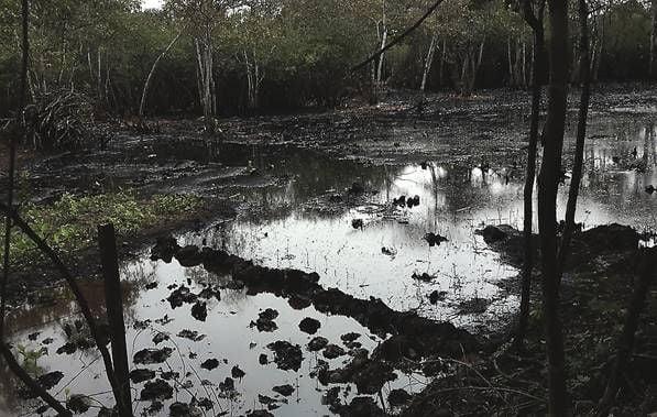 Comunidades de los municipios Bolívar y Barinas denuncian contaminación del Río Santo Domingo