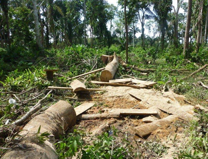 Caparo en peligro por invasión, último bosque de los Llanos Occidentales de Venezuela