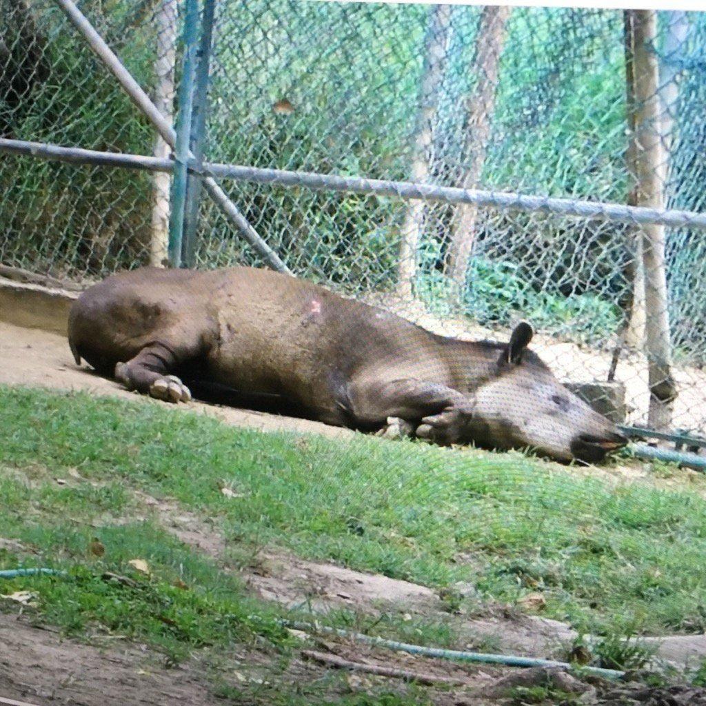La tragedia de los animales recluidos en los zoológicos de Venezuela: crisis,  especismo y opciones de libertad   Observatorio de Ecología Política de  Venezuela