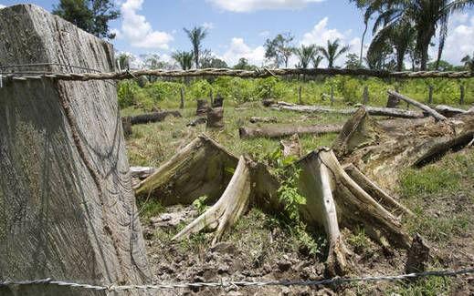 Crecen impactos de los extractivismos informales e ilegales en Venezuela