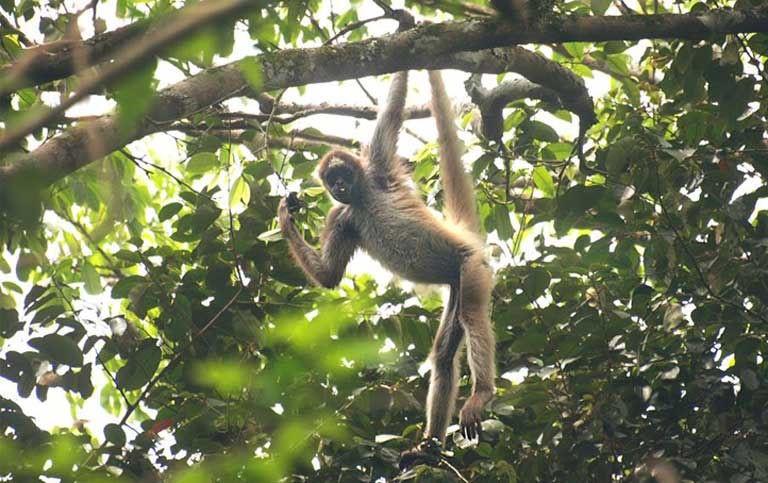BARINAS: Los últimos bosques de Caparo: aumenta el resguardo pero siguen bajo amenaza