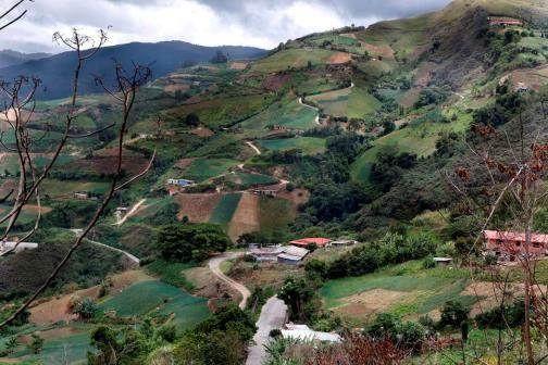 Miranda: Producción de alimentos de la comunidad del Jarillo afectada por deforestación indiscriminada