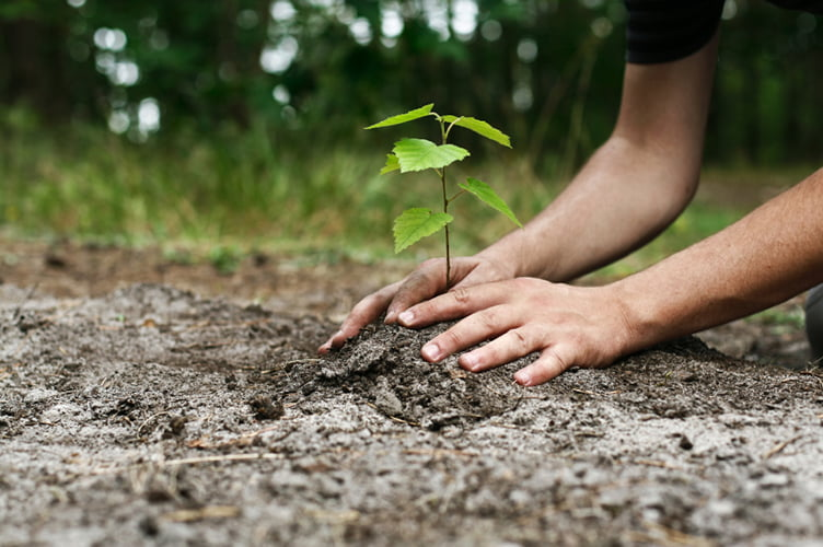 Miles de millones de árboles nuevos podrían ayudar a detener el cambio climático, pero ¿cómo lograrlos?
