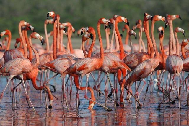 Falcón: Ecocidio en refugio de fauna silvestre de Cuare