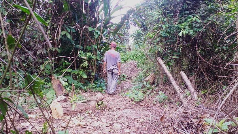 Grave deforestación en Táchira por falta de acceso al gas doméstico
