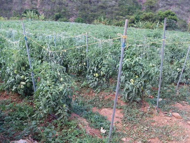 En Tacagua Vieja, a pesar de las dificultades, vecinos se organizan para combatir la crisis con agricultura