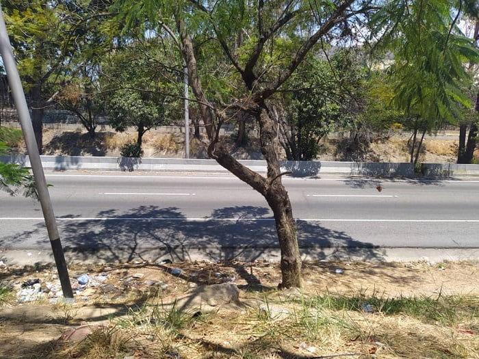 Más allá de la muerte de un venado en Montalbán. La crisis del Parque Metropolitano Leonardo Ruíz Pineda