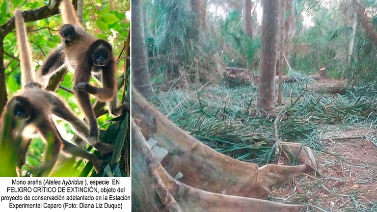La defensa de Caparo, el último relicto del sistema forestal Caparo-Ticoporo, y el rol de los medios