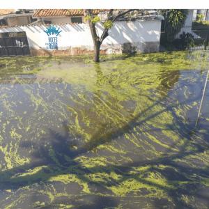 Sectores del Sur de Maracay inundados por lluvias alertan posible emergencia sanitaria