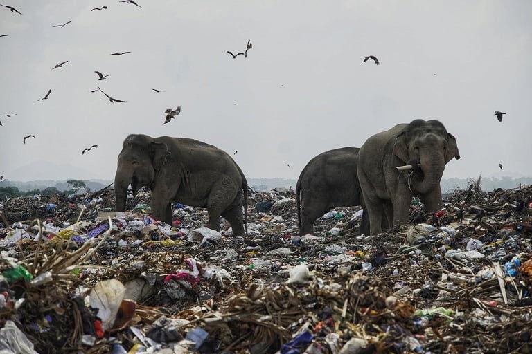 El dualismo naturaleza-sociedad en tiempos de pandemia