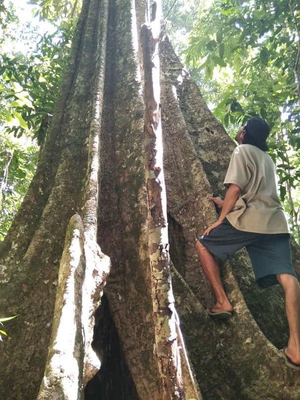 """Tak, tak, tak: En Gran Sabana, Guardianes del Bosque asumió el cuidado del Parque Municipal """"Piedra Kanaina"""" y sus alrededores"""