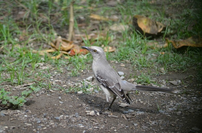Cacería y tala, enemigos de las aves del Parque del Oeste Francisco Tamayo