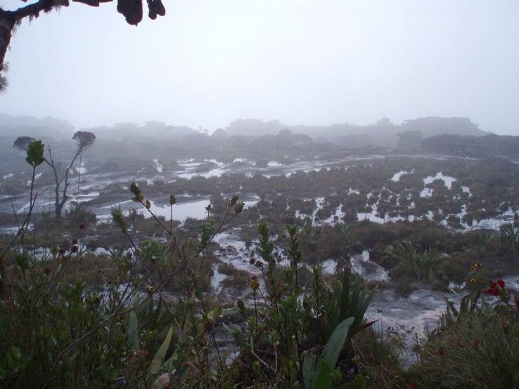 "Avance descontrolado de plantas ""invasoras"" ponen en peligro Flora tepuyana"